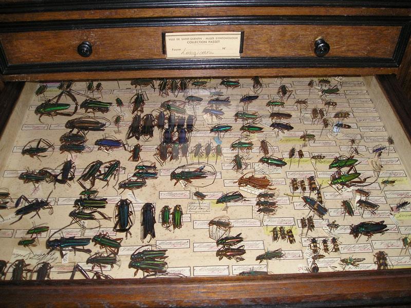 Mus e des papillons for Ancienne collection maison du monde